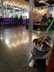 Wag Wednesdays at Down The Road Beer Co.