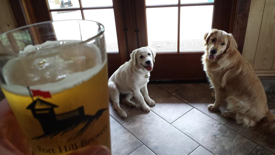 Dog friendly Fort Hill Brewery in Easthampton