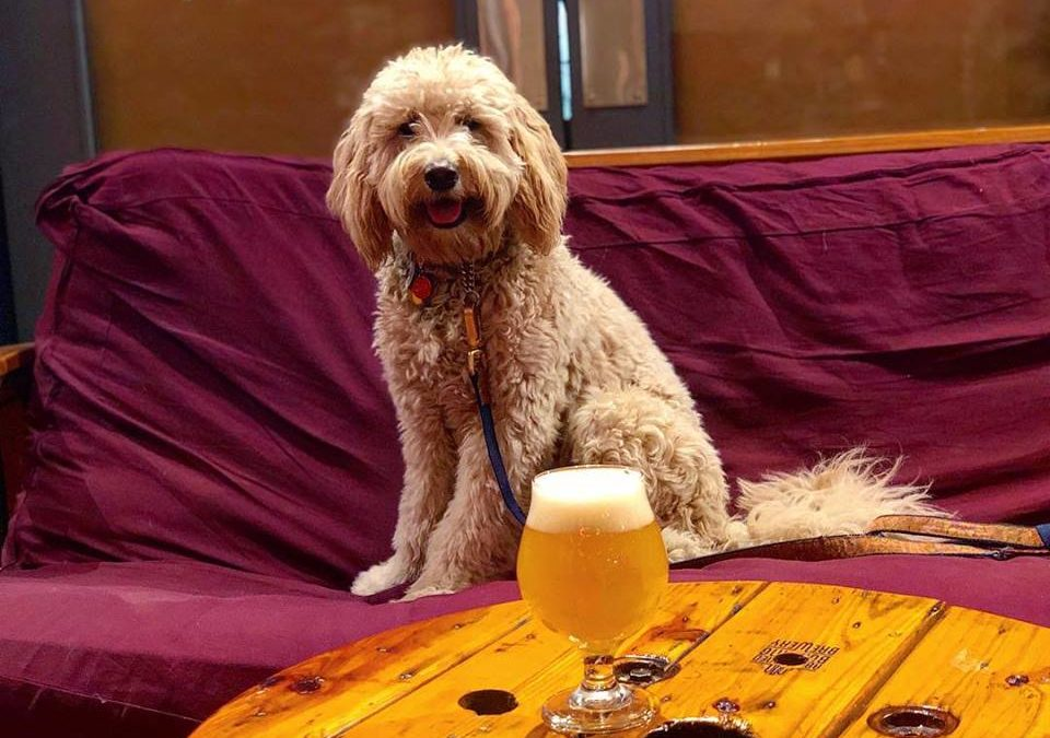 10 Spacious Taprooms That Let You Bring Your Dog Inside