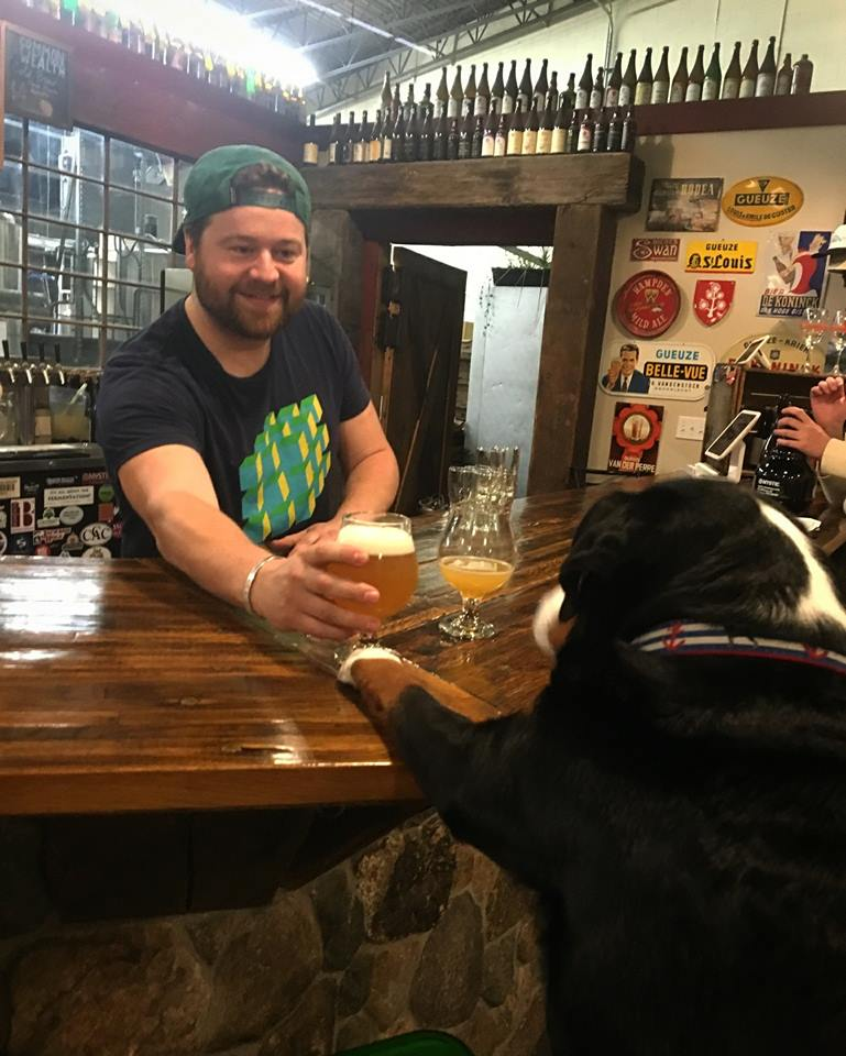 dog-friendly Mystic Brewery