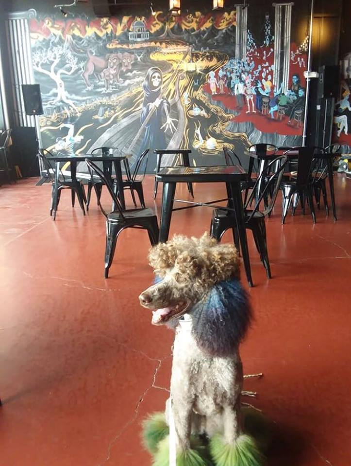 dog friendly River Styx Brewing in Fitchburg