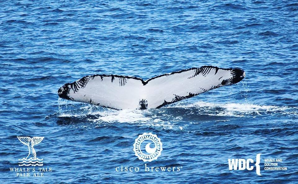 A Whale's Tale: Cisco Brewers Adopts A Humpback Whale as Part of New Partnership With Whale and Dolphin Conservation