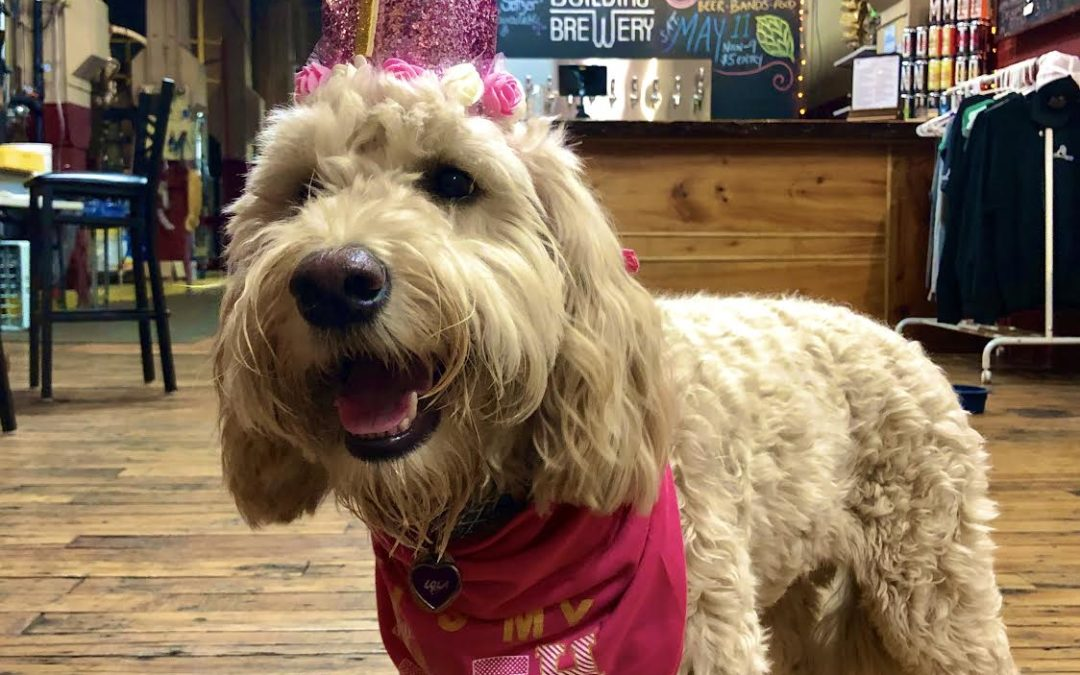 Brew Dog of the Month: Lola of Abandoned Building Brewing